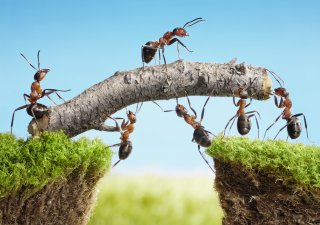 how to manage cross-functional teams